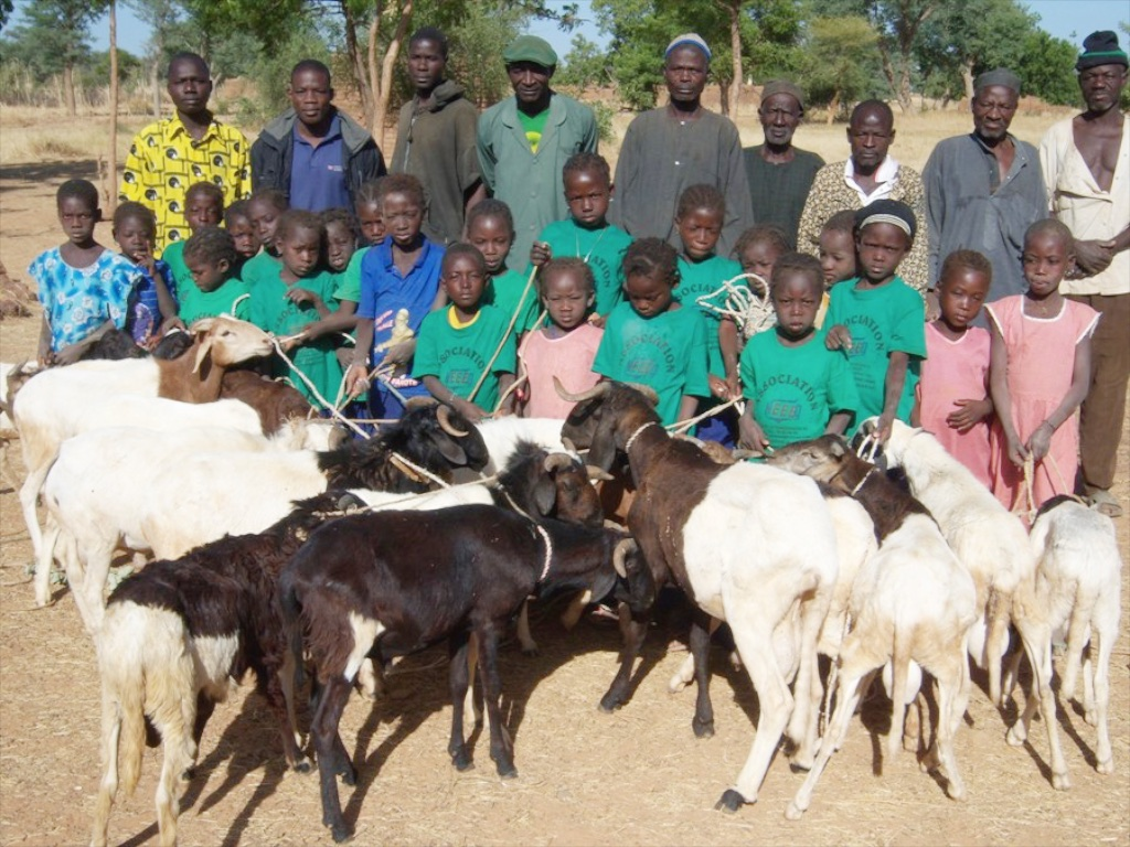 Lambs for Girls' Education in the village of Kolkom.