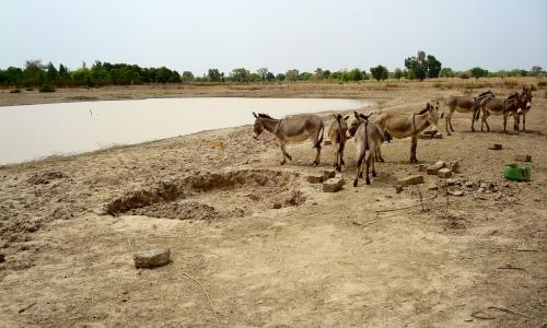 Catchment basins make possible more livestock breeding and rearing.